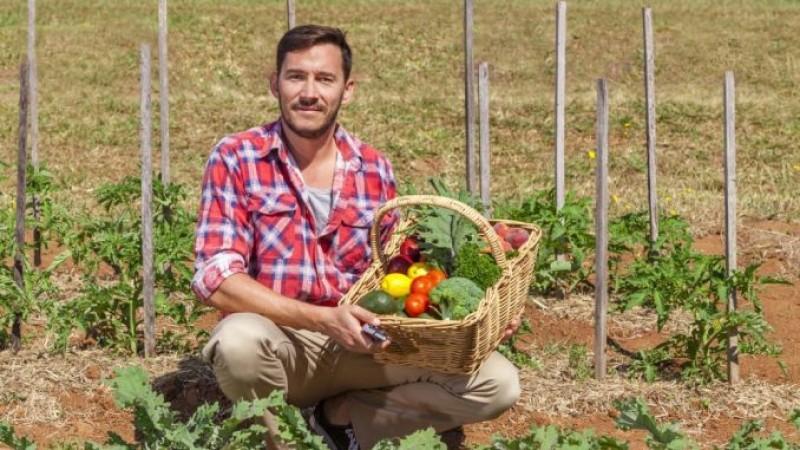 Bine de știut: TOP 10 cele mai profitabile culturi agricole pe suprafețe mici în 2017