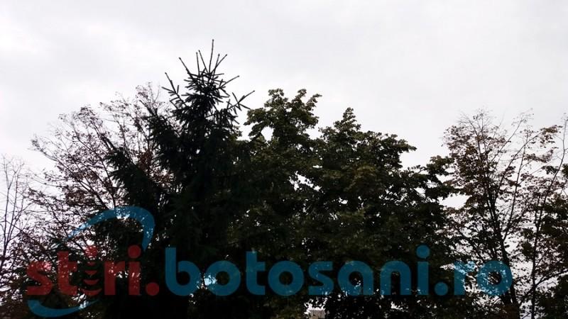 Botoşani: Avertizare meteo de vânt puternic