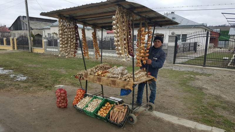 Botoșani, cel mai mare producător de usturoi din România, în ciuda unui declin major al dezvoltării ramurei