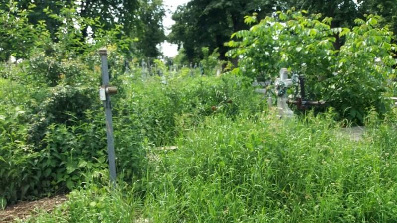 Botoșani: Mormintele din Cimitirul Eternitatea, acoperite de bălării! FOTO