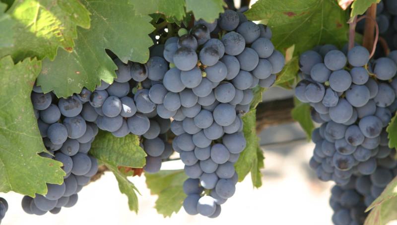 Botoşani: Povestea vinurilor, spusă de somelierul care face educaţie cu consumatorii şi cu furnizorii