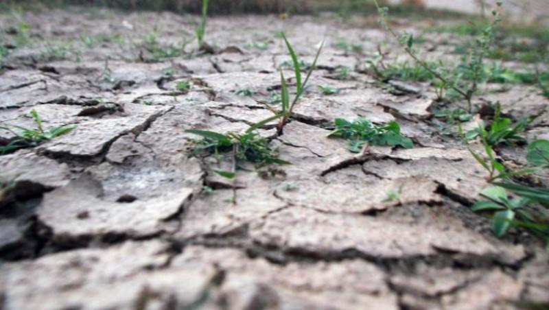 Botoșani, printre cele mai afectate de secetă județe din țară