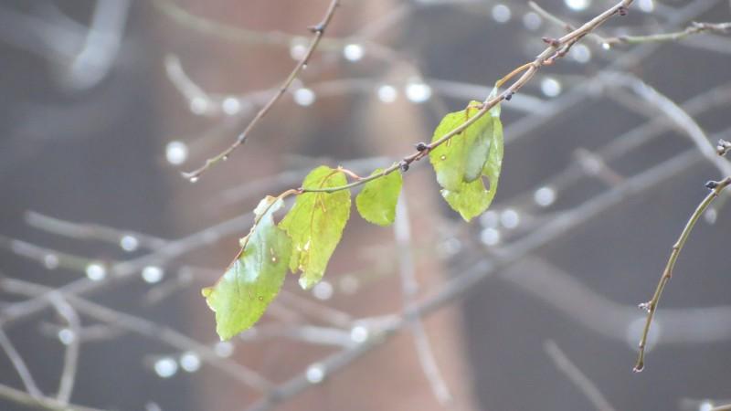 Bucurați-vă de ziua de mâine. De vineri se face frig și vin ploile