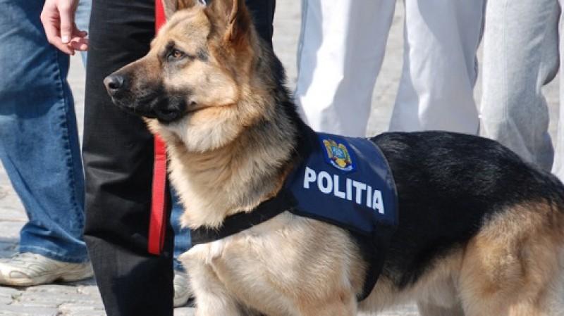 Caii și câinii de la Poliție, Jandarmerie și Armată ar putea să primească pensie!