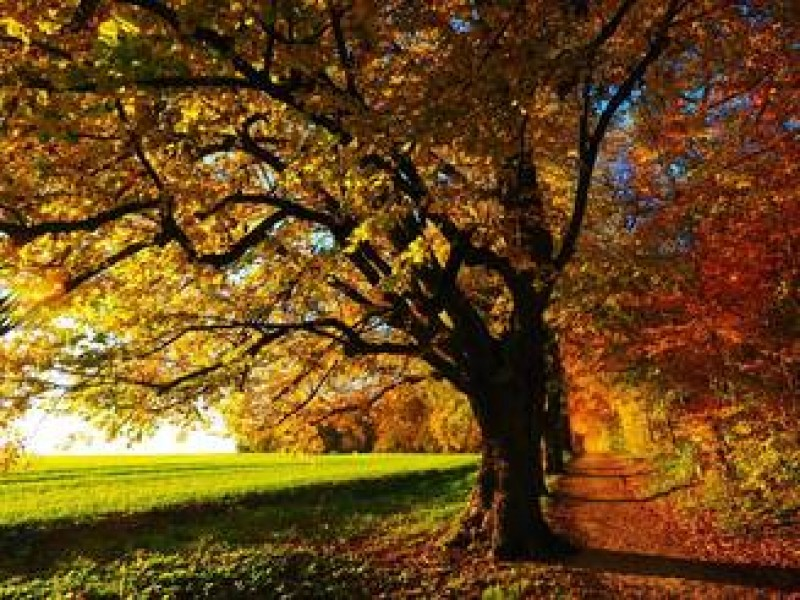 Cald ca vara, in octombrie. Se anunta zile cu vreme excelenta