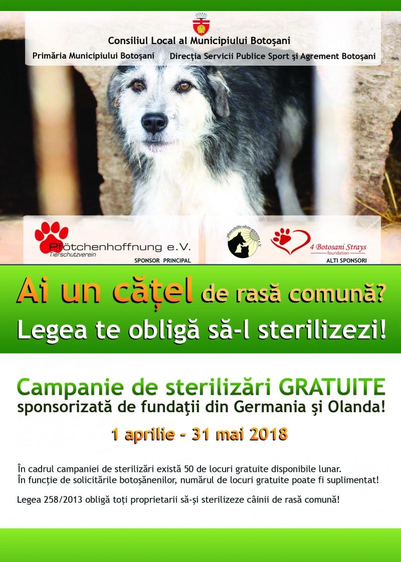 Campanie de sterilizare gratuită a câinilor, în Botoșani!
