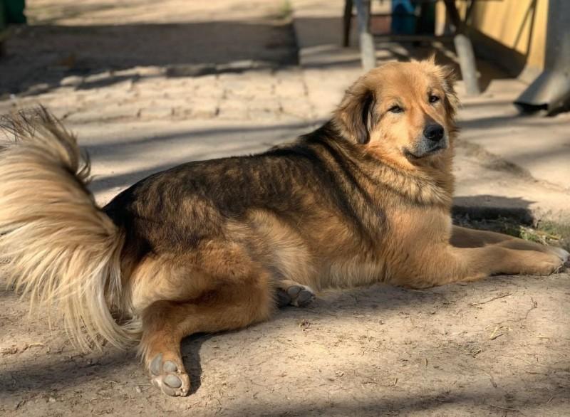 Campanie de sterilizare gratuită a animalelor, organizată de un cabinet veterinar din Botoșani