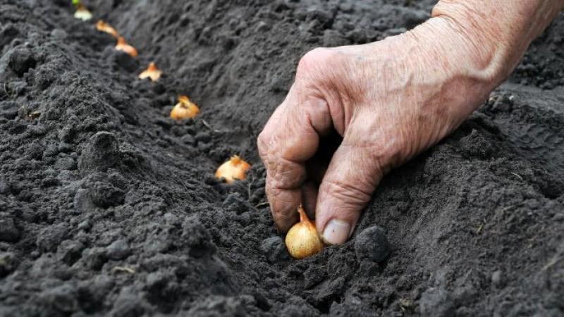 Când se plantează legumele în grădină - Calendar pentru anul 2017