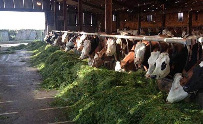 Cantitatea de lapte de vacă colectată în România a crescut cu 3,1% în primele 7 luni! Producția fermierilor români se impune pe piața locală!