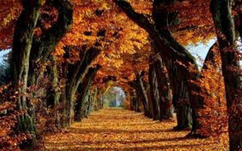 Ce dezvăluie arborele zodiei tale despre destinul tău!