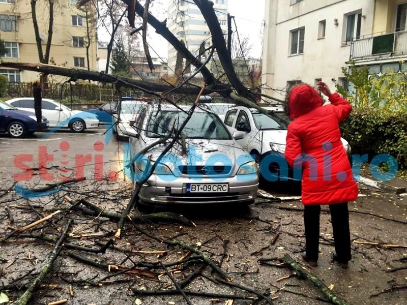 Ce spun reprezentanții Primăriei despre incidentul de pe Octav Onicescu, unde trei mașini au fost avariate de un copac!