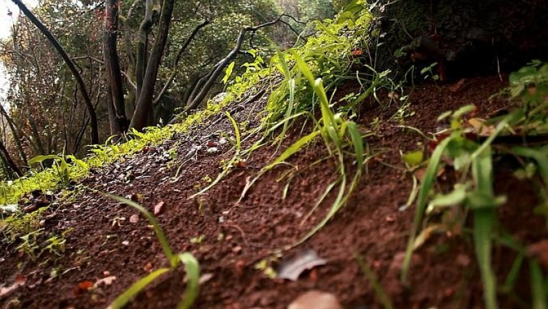 Ce trebuie să știți despre pământul de pădure