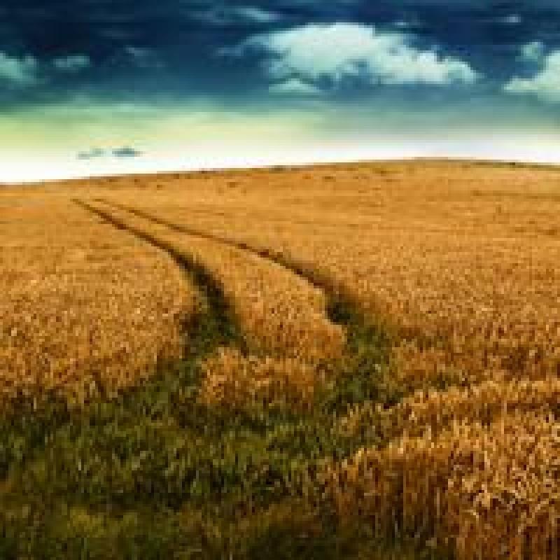 Cele mai profitabile idei de afaceri pentru cei care detin teren arabil