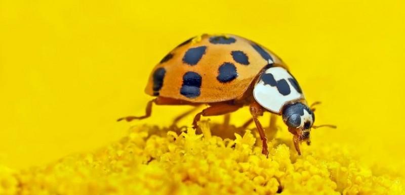 Cheama in gradina insectele folositoare!