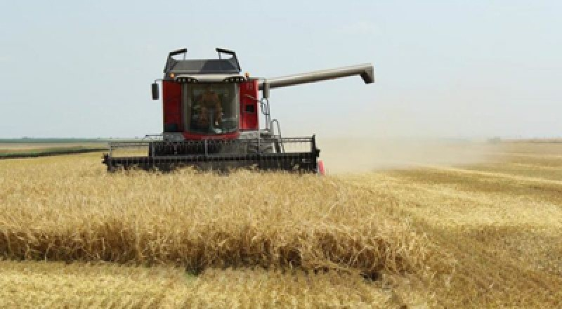 Chiar dacă acum plouă, meteorologii anunță secetă pentru culturile de grâu din acest ajn