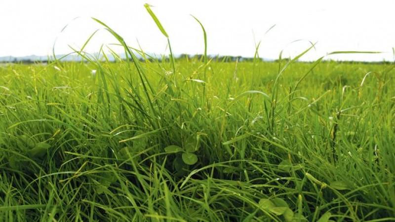Chiria pe pășune. Ce sume plătesc crescătorii de animale pentru un hectar de pășune!