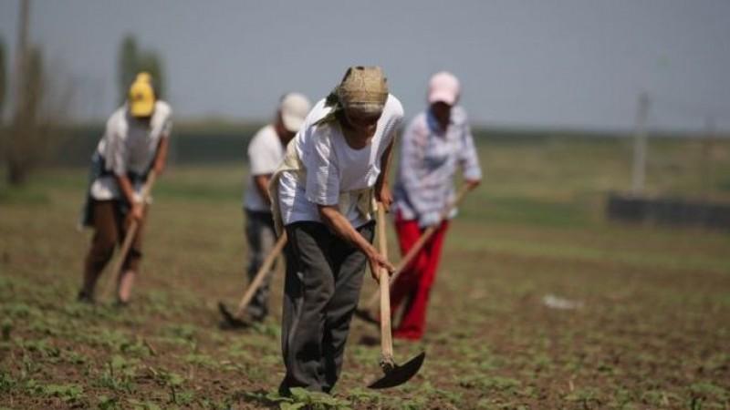 Cine refuză să lucreze ca zilier nu mai primește ajutor social - proiect