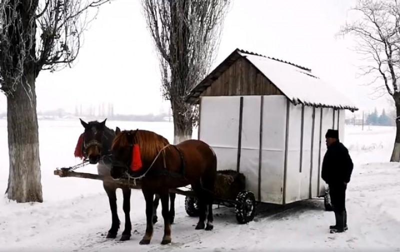 Ciobanul din Botoșani care și-a pus casa pe roți și e trasă de cai. Nea Ion își poartă după el nevasta gravidă! VIDEO
