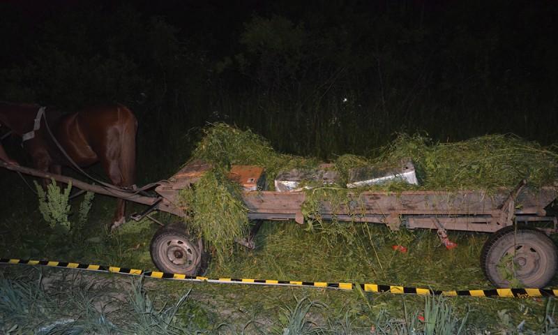 Contrabandă cu căruța, pe malul Prutului. Marfa urma să ajungă pe piața neagră din România! FOTO