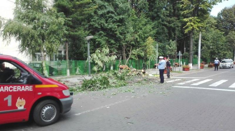 Cad copacii ca popicele în municipiul Botoşani! FOTO