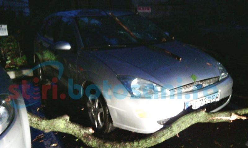 Copac rupt, căzut peste o maşină parcată în centrul Botoşanilor! FOTO