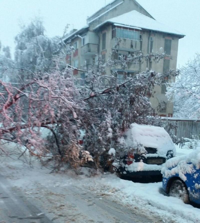 Copaci doborâţi de zăpadă. Pompierii solicitaţi să intervină-FOTO