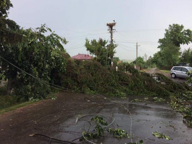 Copaci puşi la pământ de furtună, în două comune din Botoşani! FOTO