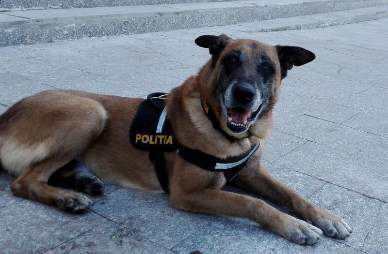 Copiii din Botoșani, cuceriți de John, câinele poliţist! FOTO