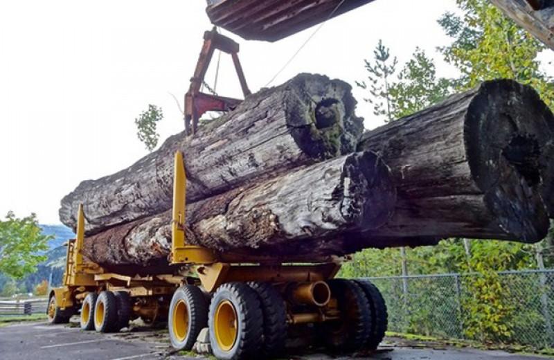 Costel Șoptică votează legea lui Liviu Dragnea: România interzice pe o perioadă de 10 ani exportul de buștean și lemn de foc!
