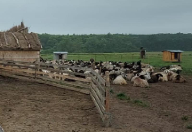 Cotă de inundație depășită la Oroftiana. Ciobani și animale evacuați de pompieri