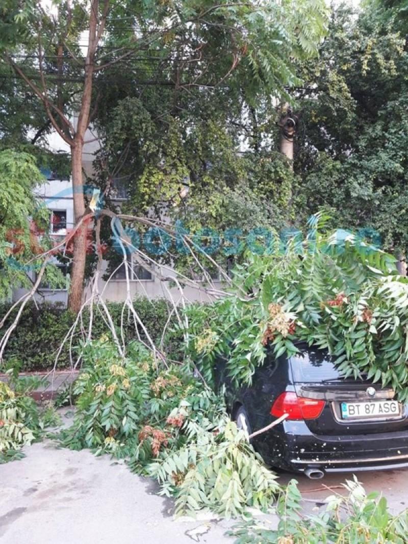 Crengi rupte dintr-un copac, prăbuşite peste maşini! FOTO