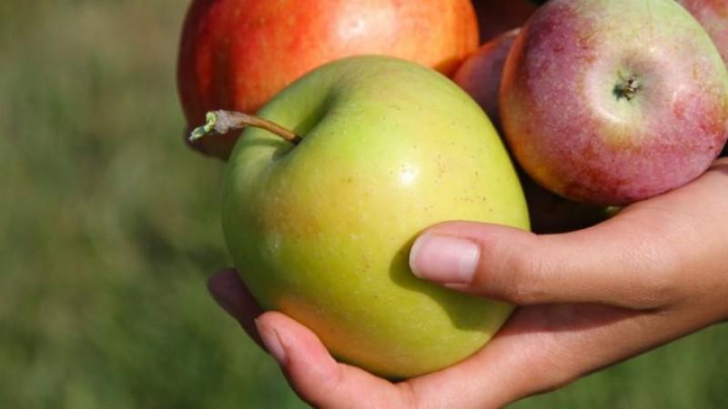 Crește numărul copiilor din grădinițele din Botoșani care vor primi mere