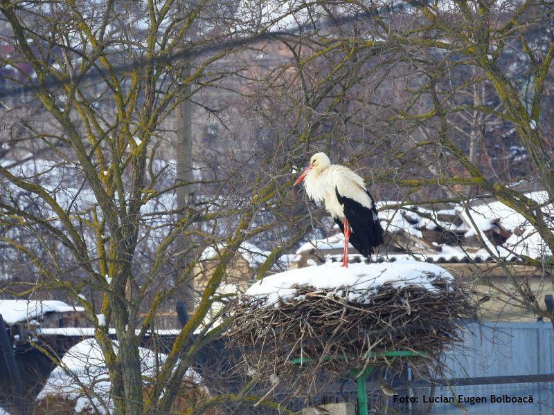Cum și când salvezi o barză. Nu ignora păsările care suferă de frig!