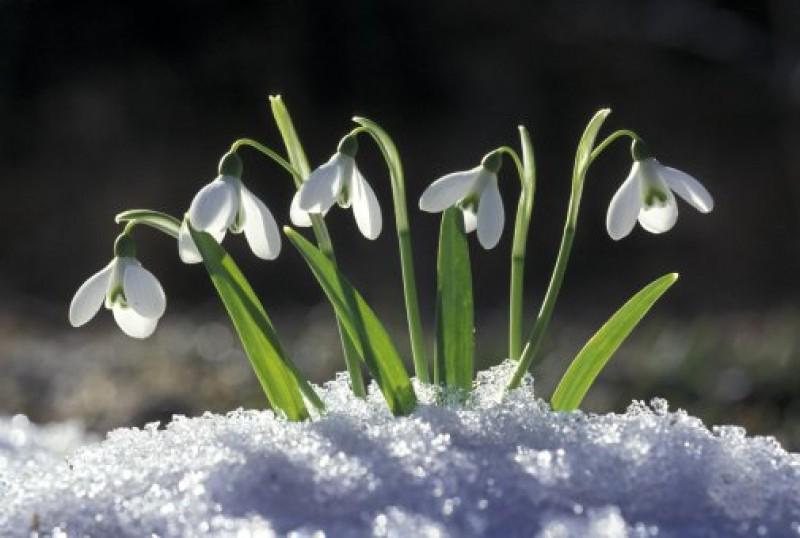Cum va fi vremea in urmatoarele luni - prognoza meteo pana in aprilie!