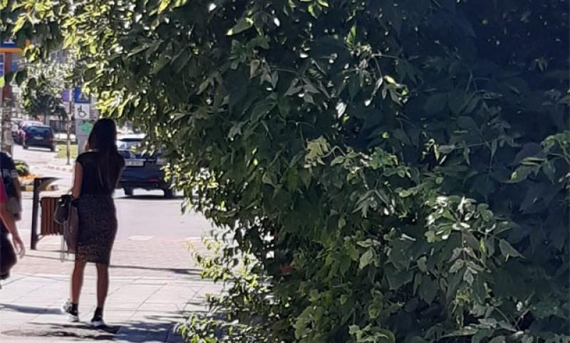 Persoanele cu deficiențe de vedere din Botoșani întâmpină probleme din cauza netoaletării spațiului verde