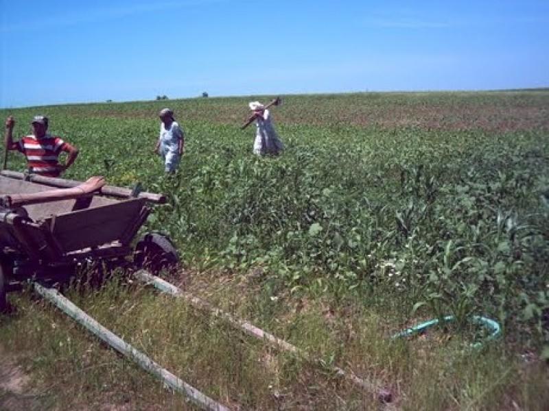 De ce NU sunt rentabili fermierii români
