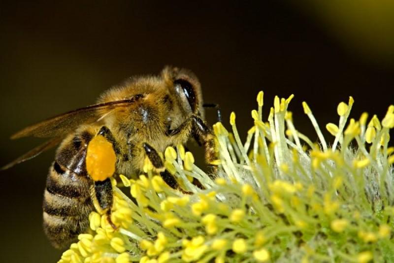 De ce se poate transforma o înțepătură de insectă într-o tragedie?