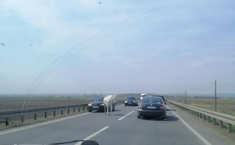 Din trafic: Un cal a apărut în mijlocul drumului! FOTO