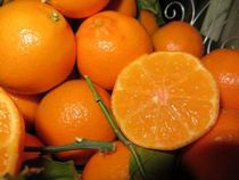 Director ANPC: Cititi cu atentie etichetele citricelor! Pot fi tratate cu o substanta care ataca ficatul si rinichii