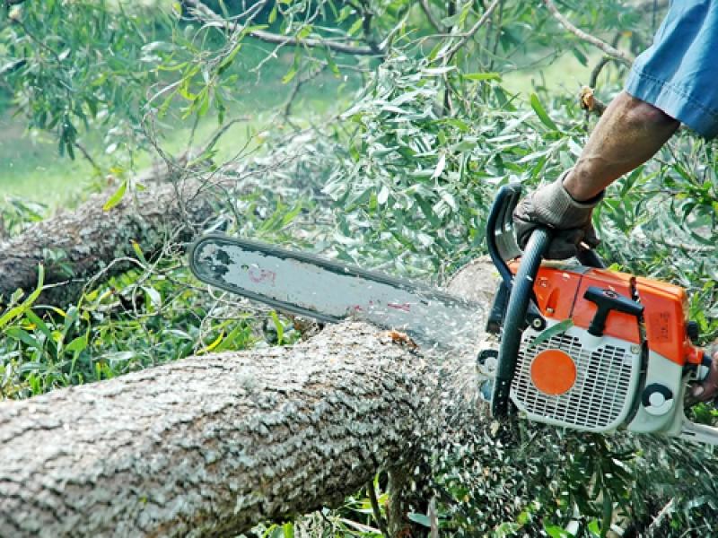 Doi bărbați cercetați pentru tăiere ilegală de arbori!