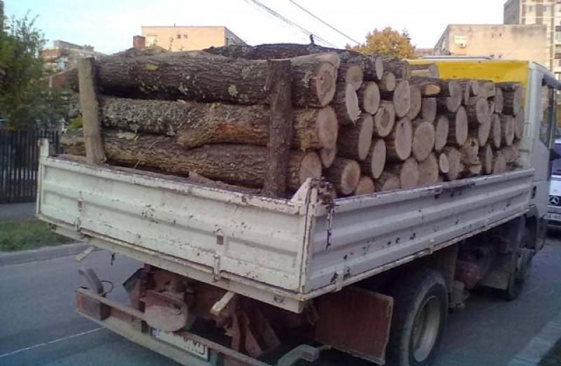 Doi botoșăneni au fost prinși de polițiști la Suceava cărând în mașini cantități de lemne mai mari decât cele care scriau pe acte. Unul din ei transporta a doua oară în baza aceluiași aviz