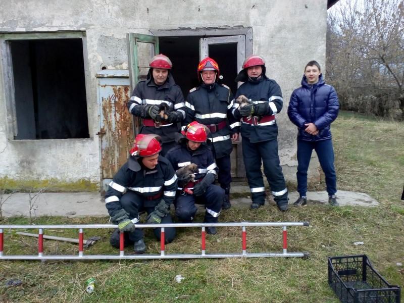 Doi copii au chemat pompierii pentru a salva trei cățeluși rămași captivi într-un subsol! FOTO