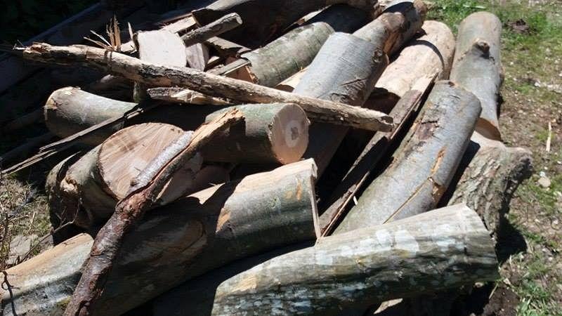 Dosare penale pentru doi tineri din județ, după ce au furat 56 de butuci dintr-o pădure
