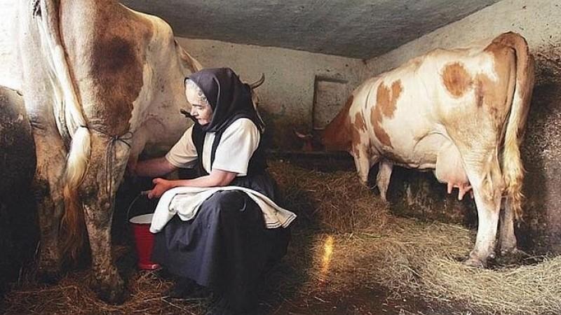 Dr. Mihai Petcu: La țară se bea de 10 ori mai mult lapte decât la oraș și oamenii mor mai puţin de cancer!