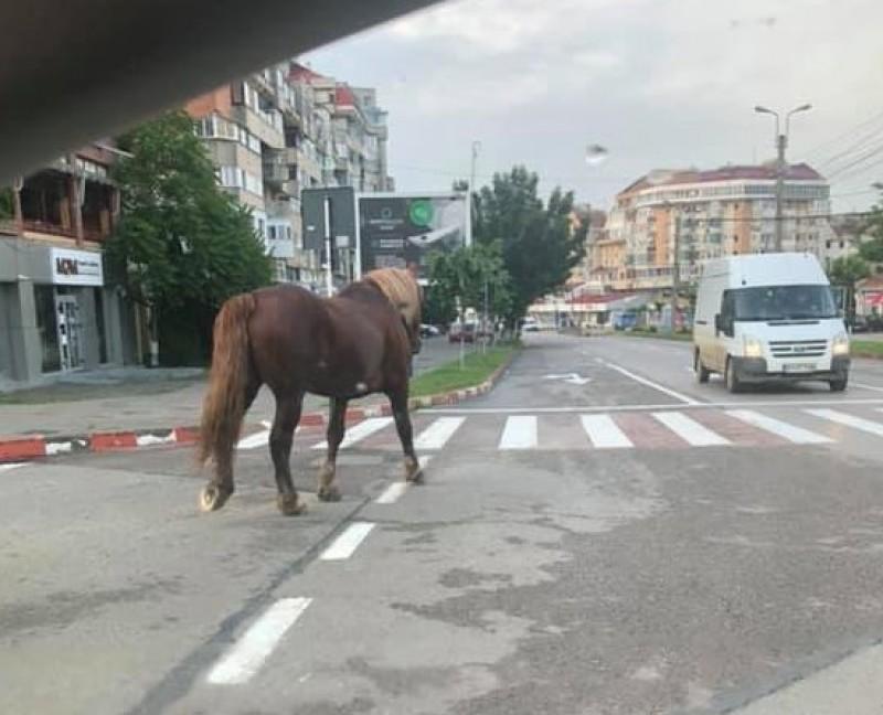 Drum lung: Calul care a venit singur la oraș, fotografiat de șoferii aflați în trafic! FOTO