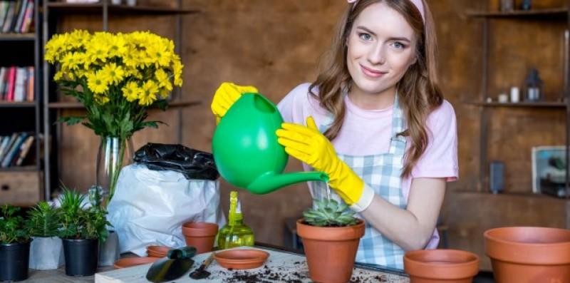 E BINE SĂ ȘTII: Efectul plantelor de apartament asupra sănătății!