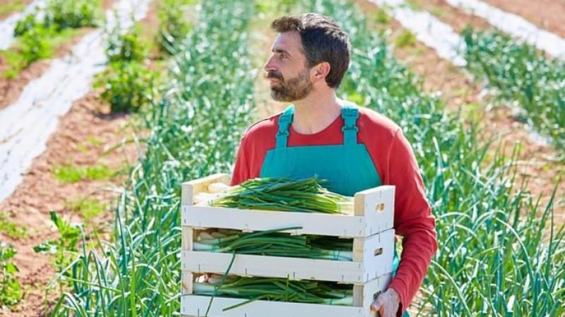 E bine să știi: Greșeli pe care le fac agricultorii începători