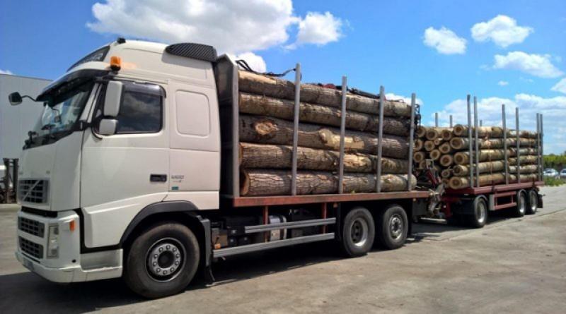 E lege: de astăzi, TIR-urile sau camioanele cu care sunt transportaţi arborii tăiaţi ilegal vor fi confiscate