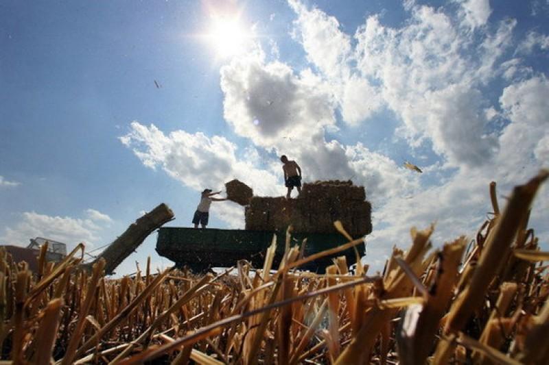 E oficial. Cea mai mare fermă de cereale din România a intrat în posesia arabilor!