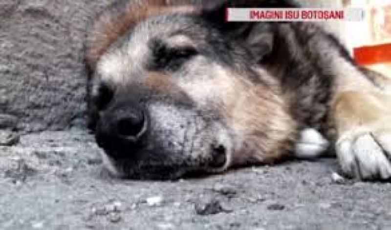EMOȚIONANT: Rex, câinele care a păzit 13 ani sediul ISU Botoșani, operat cu ajutorul pompierilor